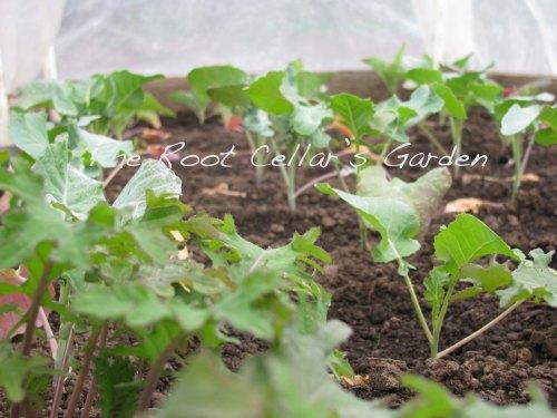 December Seeds planted