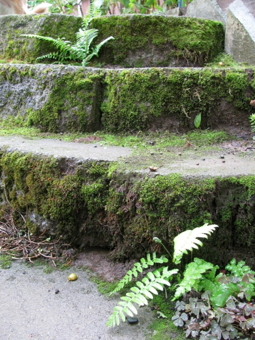 Wet steps with ferns